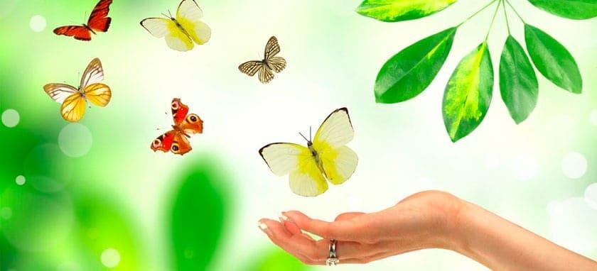 Купон на выставку бабочек