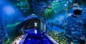 Океанариум в Крокус Сити