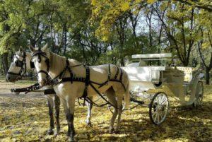Катание в карете от КСК «Баллада»