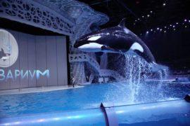 Шоу «Тайна четырёх океанов»