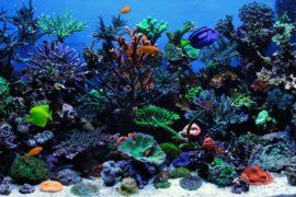 Морской Аквариум — Океанариум