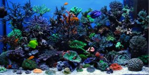 Морской Аквариум - Океанариум