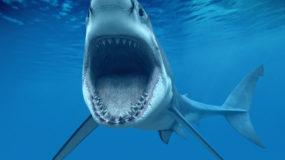 Шоу кормления акул в океанариуме