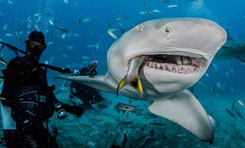 Билеты на кормление акул