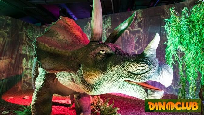 Купон в Dino Club