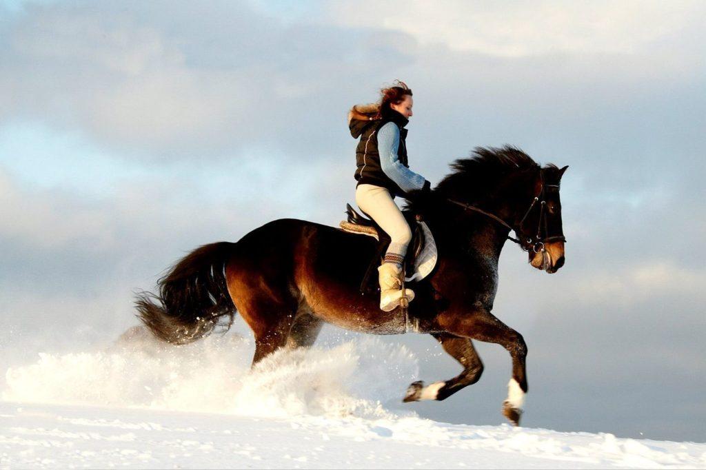 Конная прогулка в лесу от конного клуба «Авиньон»