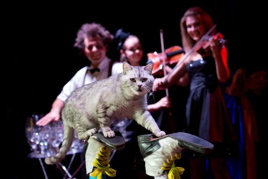 Билеты в Театр кошек Куклачева