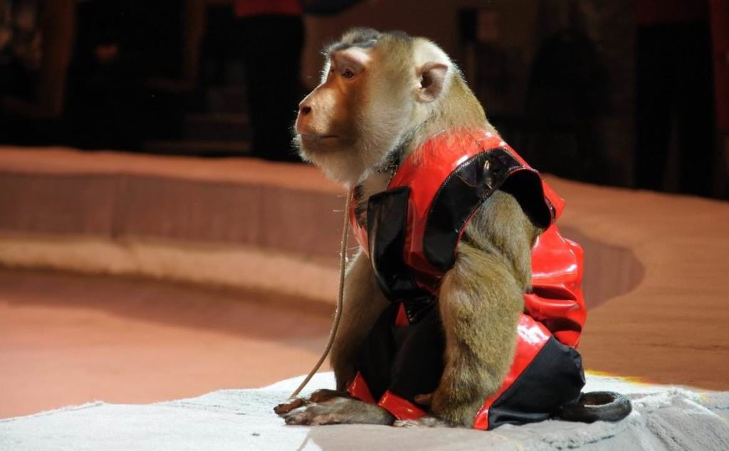 Шоу обезьян в Театре иллюзии