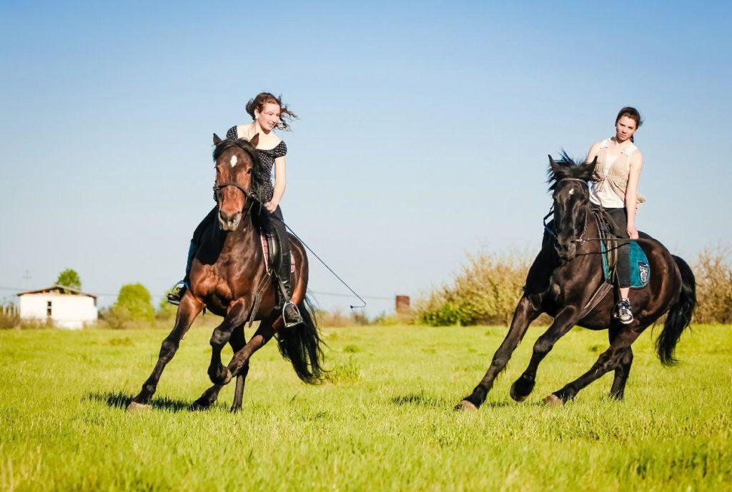 Конные прогулки влесу или вполе отконного клуба «Авиньон»