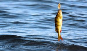 Рыбалка в Горчухино
