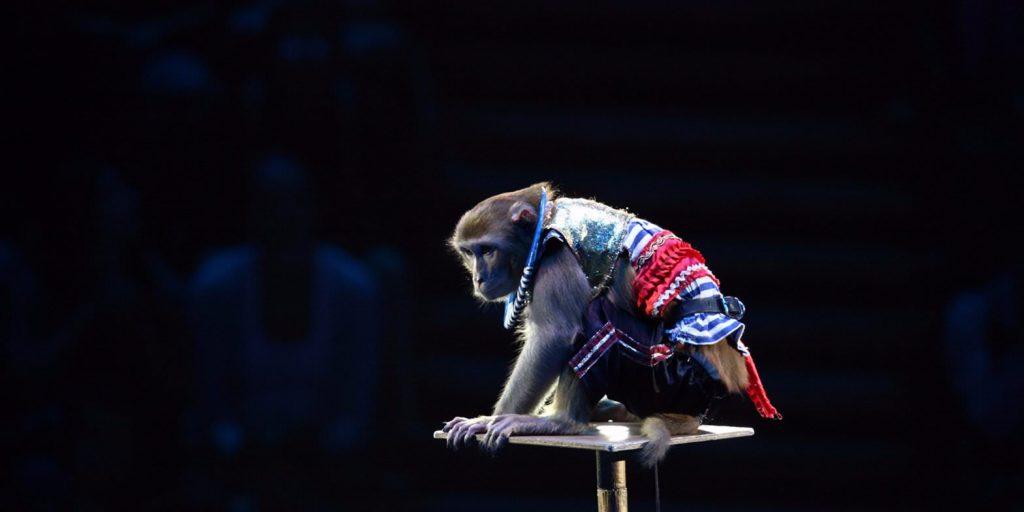 Билеты на шоу обезьян