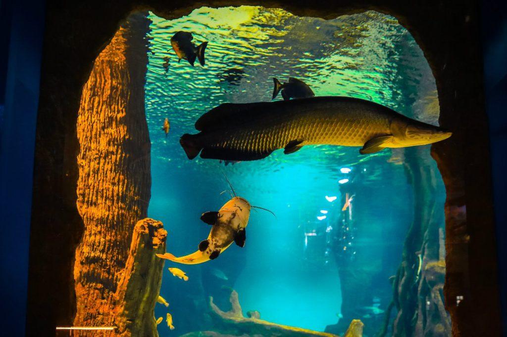 Крупнейширй океанариум «Москвариум»