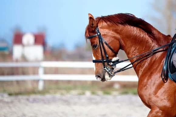 Купон в конный двор «Хутор»