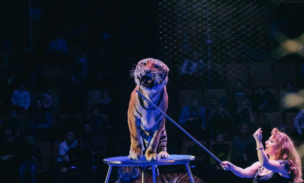 Цирковое шоу «Все краски мира!»
