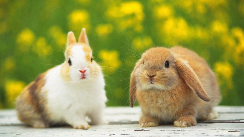 Экскурсия сфотосессией скарликовыми кроликами вантикафе Zaycafe