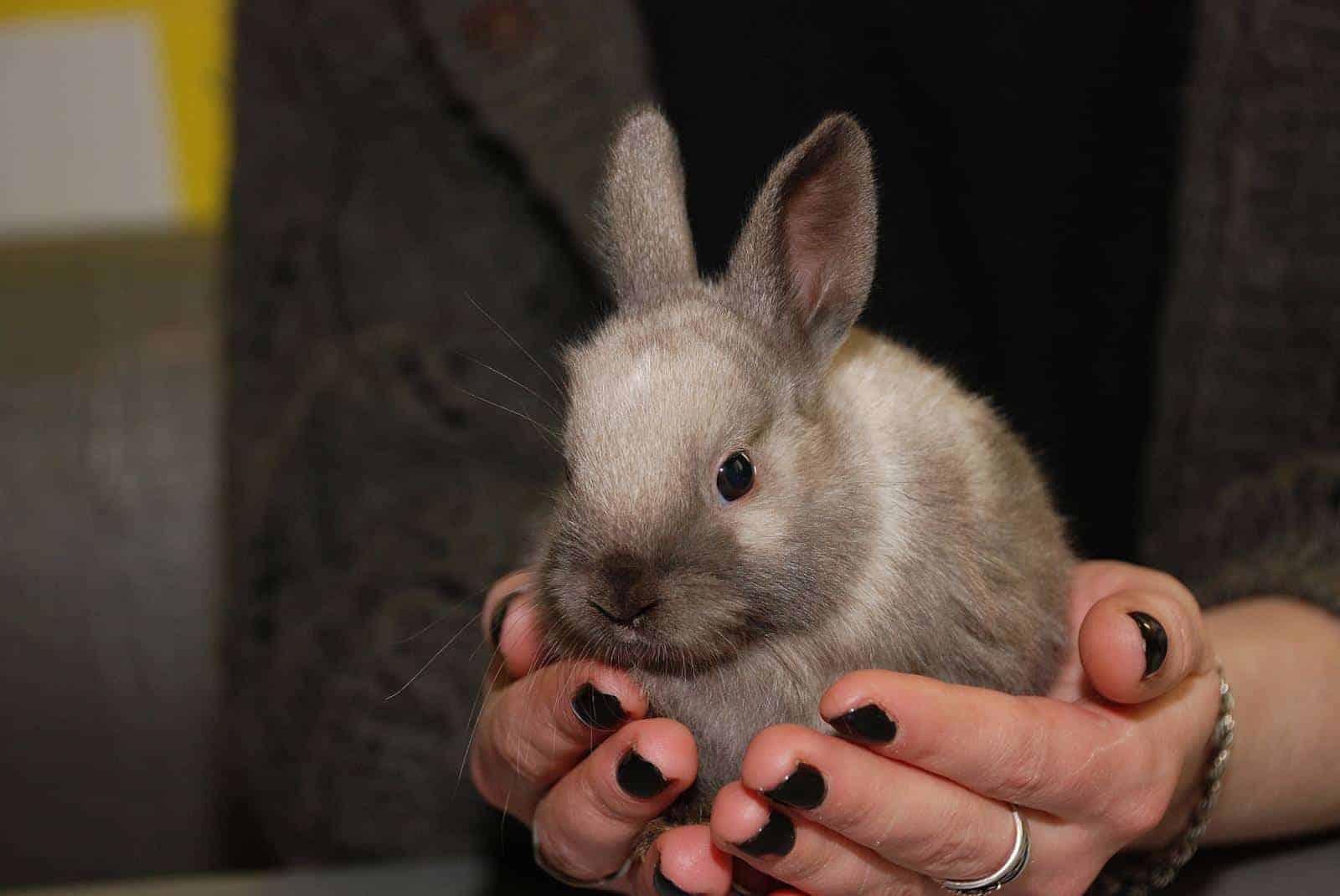 Экскурсия сфотосессией скарликовыми кроликами вантикафе Zaycafe до 29 марта 2019