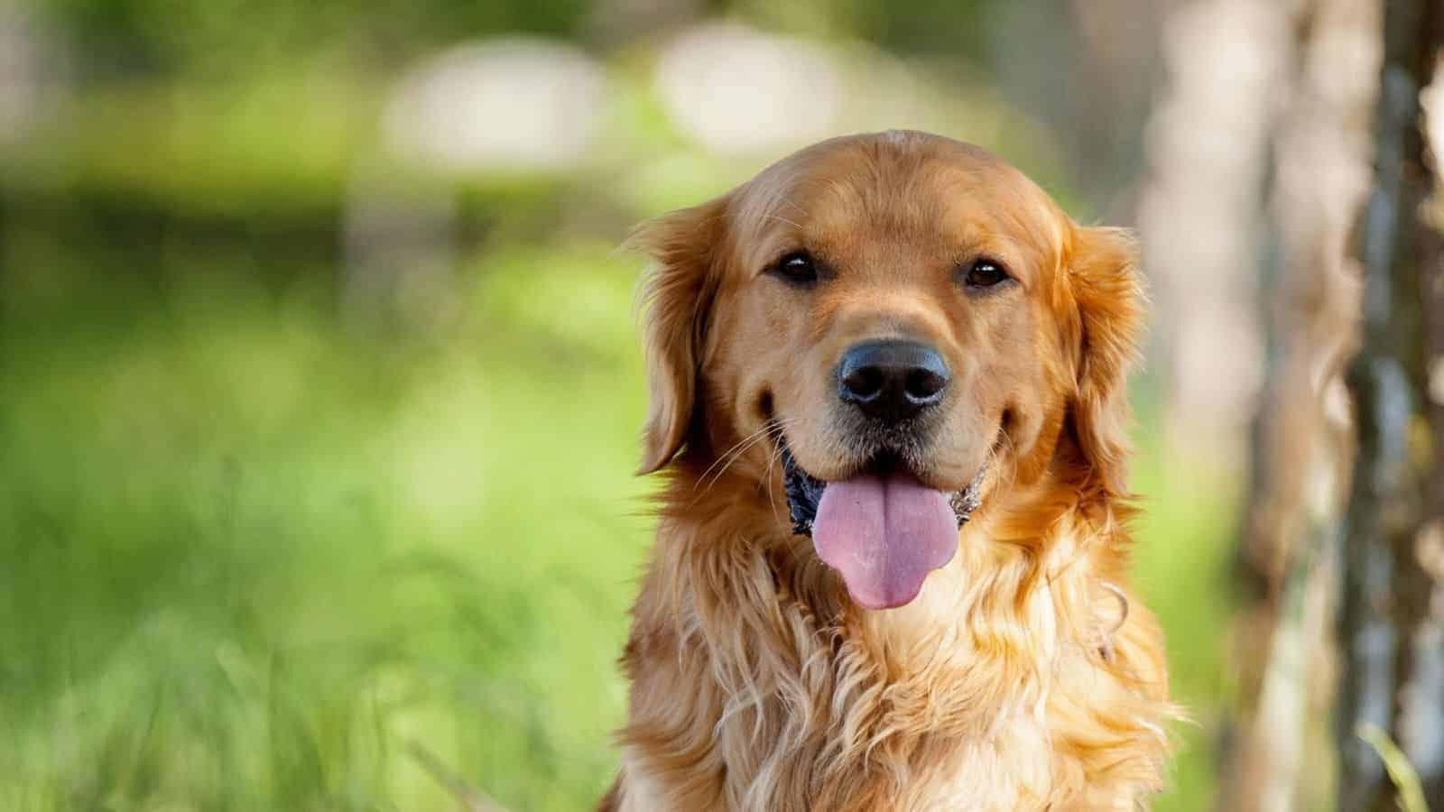 Выставка собак «Евразия 2019» в Крокус Экспо