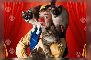 Я-КЛОУН или КОТОСТРОЙКА в Театре кошек Куклачева